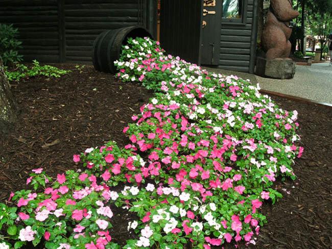 Falling Down Flowers Wallpaper 22 Best Spilled Flower Pot Ideas And Designs For 2019