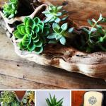 33 Best Diy Indoor And Outdoor Succulent Planter Ideas For 2021