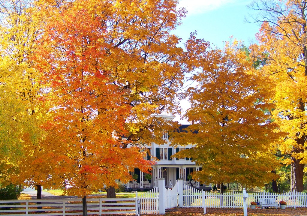 House In Autumn Trees