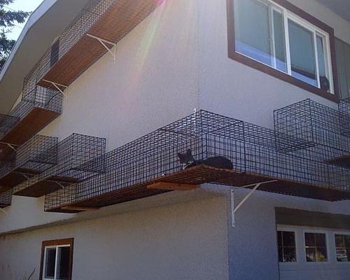 Catwalk Around House