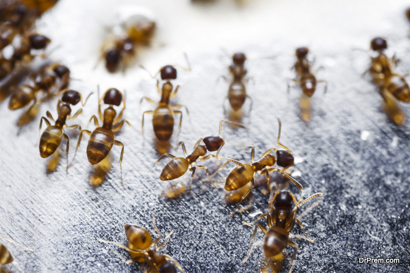 Risk Factors Involved With Indoor Pests