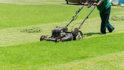 dull grass