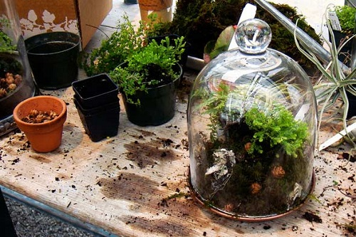 terrarium-plants-pot-dirt-590rr040810