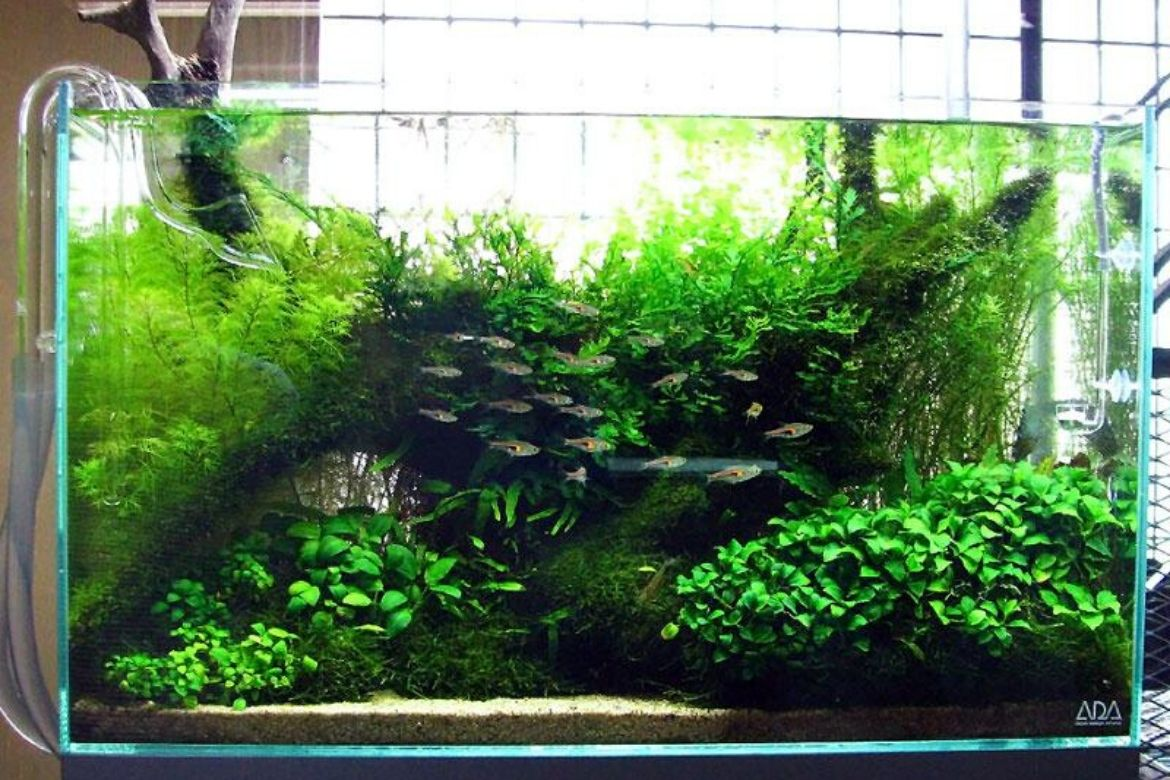 6 Jaw Dropping Aquascaping Ideas That Ll Be An Eye Catching Addition To Any Home Homedecomalaysia