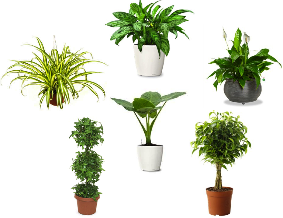 air purifying plants indoor plants