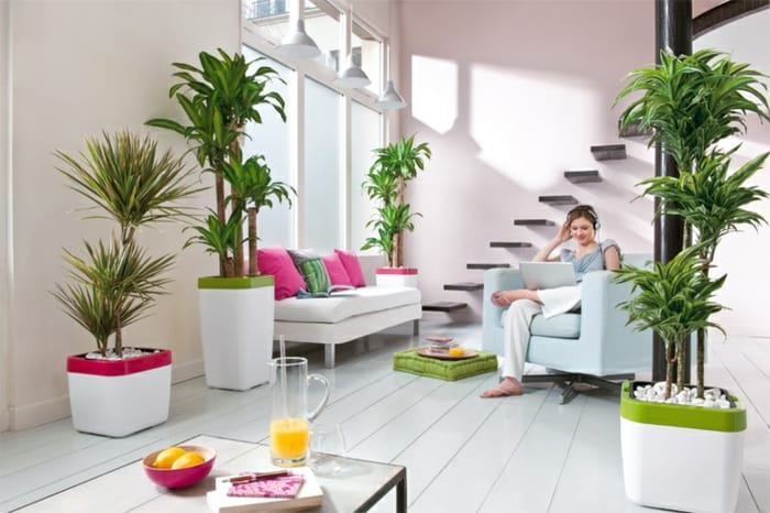 Beautiful Indoor Plants To Decorate Your Home