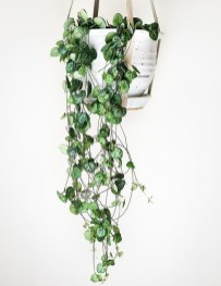Inspiring Indoor Plans Garden Ideas To Makes Your Home More Cozier 10