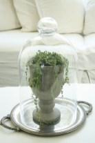 Inspiring Indoor Plans Garden Ideas To Makes Your Home More Cozier 23