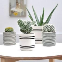 Inspiring Indoor Plans Garden Ideas To Makes Your Home More Cozier 26