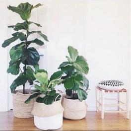 Inspiring Indoor Plans Garden Ideas To Makes Your Home More Cozier 50