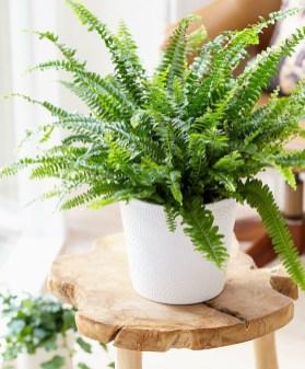 Inspiring Indoor Plans Garden Ideas To Makes Your Home More Cozier 54
