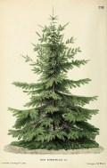 37 Totally Beautiful Vintage Christmas Tree Decoration Ideas 35
