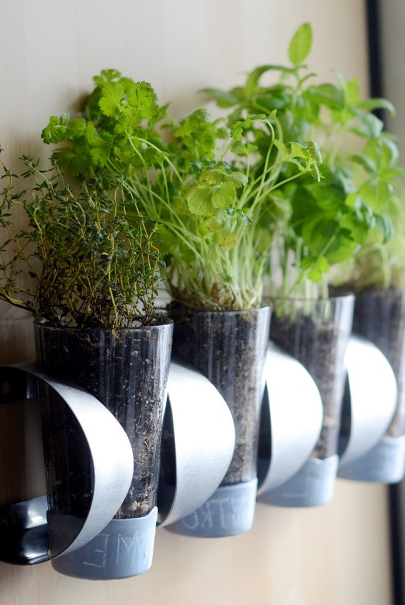 10 Diy Indoor Herb Garden Ideas And Planters Theyre Easy