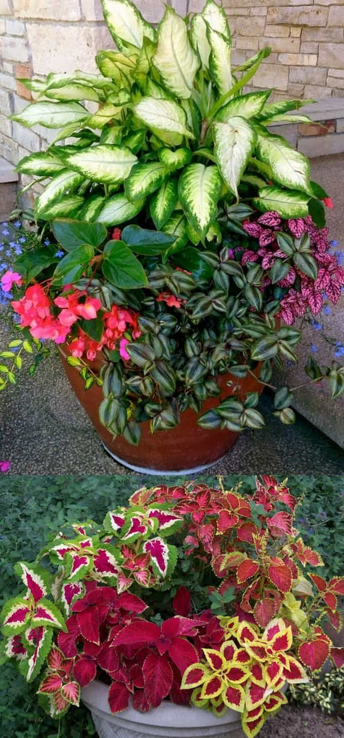 16 Colorful Shade Garden Pots Plant Lists Flower