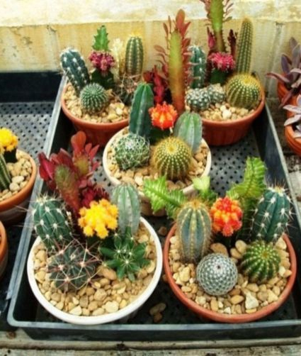 20 Beautiful Cactus Garden Ideas For Best Garden