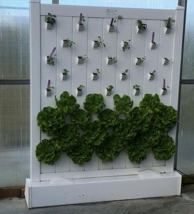 22 Awesome Indoor Hydroponic Wall Garden Design Ideas
