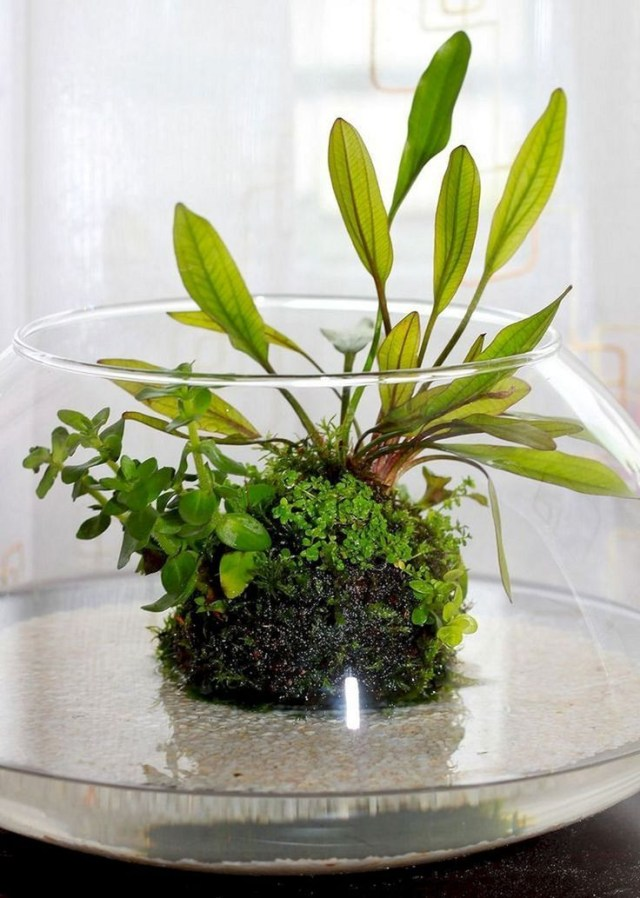 25 Incredible Indoor Water Garden Design And Decor Ideas