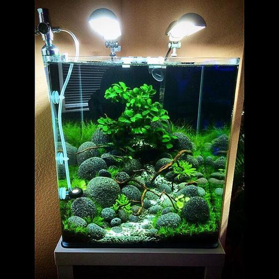 9 Aquascape Nano Tank Ideas Aquascape Paludarium Blog