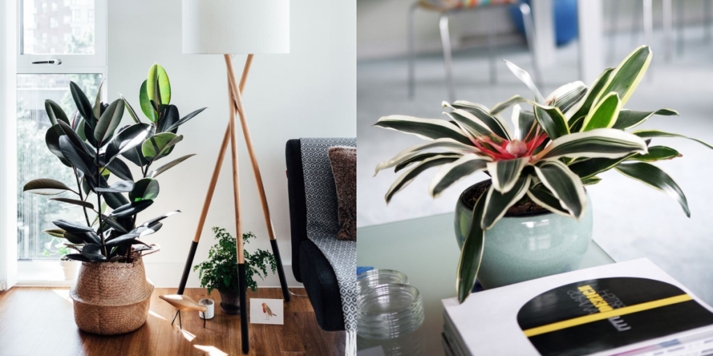Adding Life And Color To Your Bathroom Indoor Plants