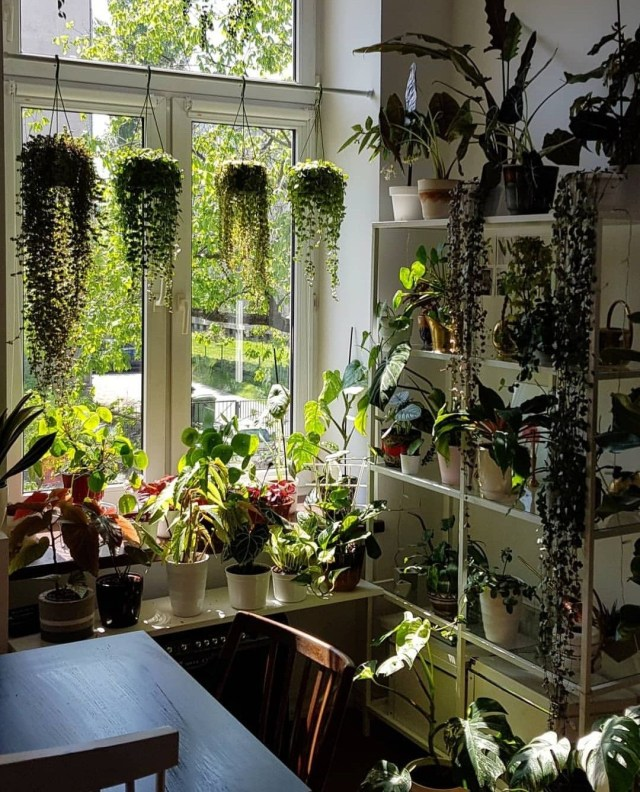 All The Drape Y Plants With Images Plant Decor Indoor