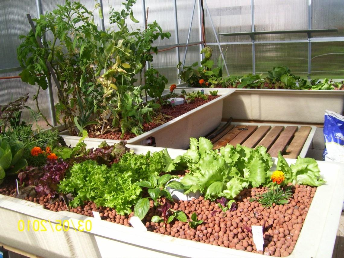 Aquaponics Garden Backyard Aquaponics Aquaponics