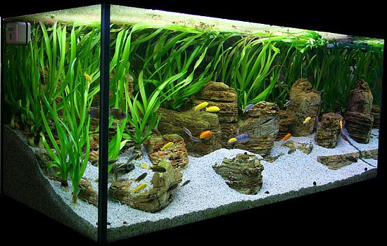 Aquarium Setup Ideas Beautiful House Plans Home Designs