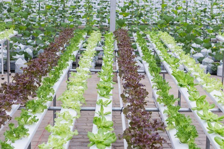 Best Hydroponic System 2019 Top 5 Reviews And Complete Guide