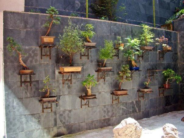 Bonsai Garden Design Bonsai Aalar Dikey Baheler Ve