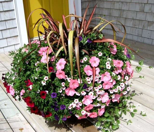 Choosing Annuals For Container Gardens Part 1 Sunlight