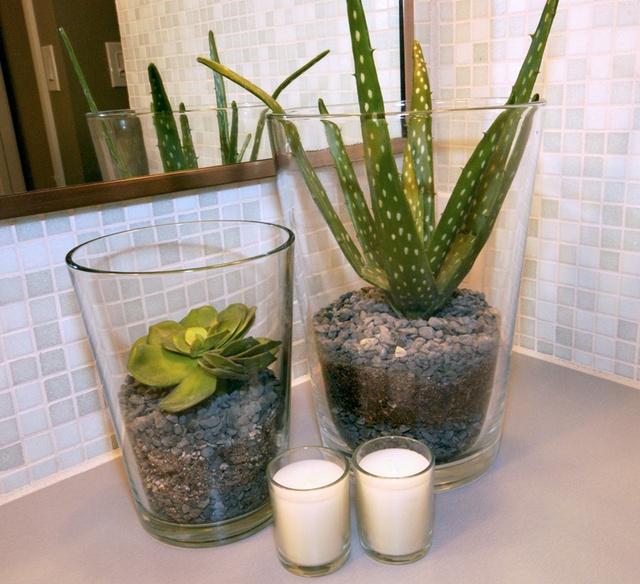 Cool Elegant And Healthy Indoor Plants Homesfeed
