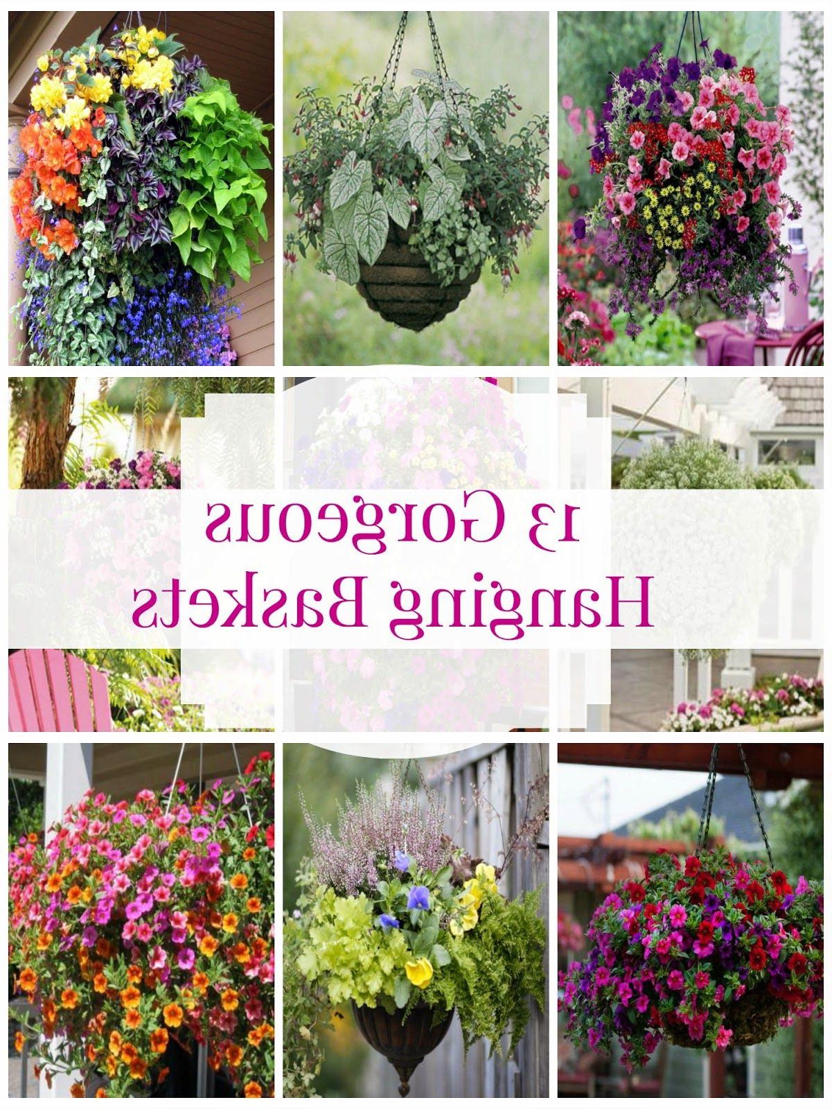 Hanging Flower Basket Inspiration Hanging Plants