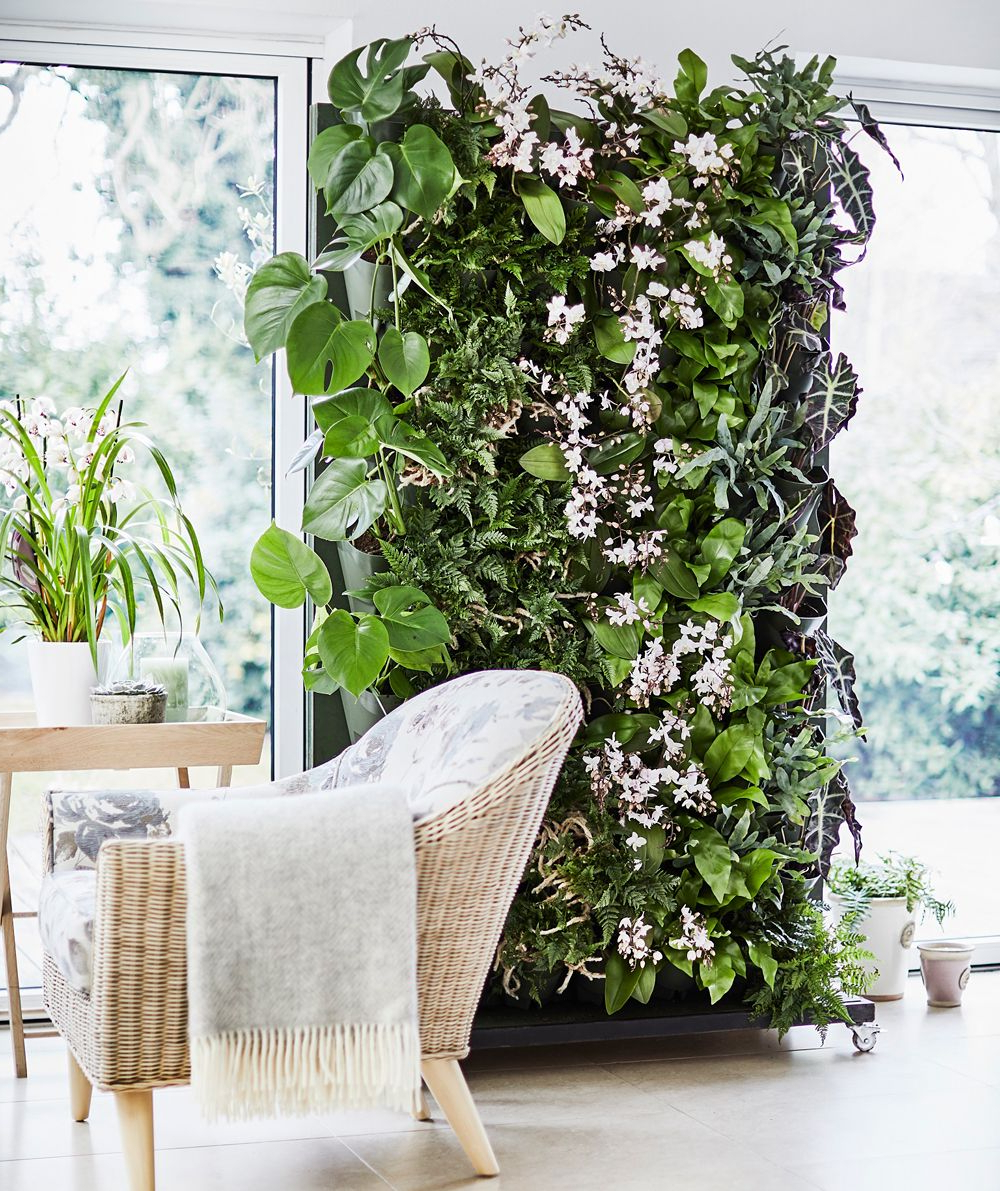 How To Make A Living Plant Wall Indoor Plant Wall Plant