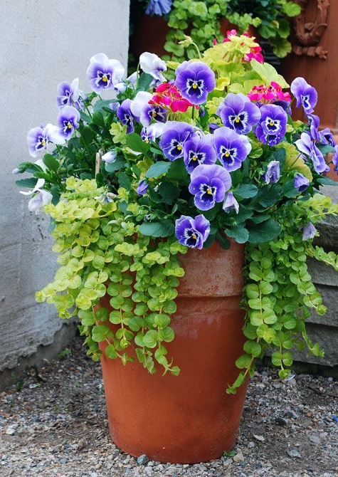 I Am So Ready For Spring Garden Containers