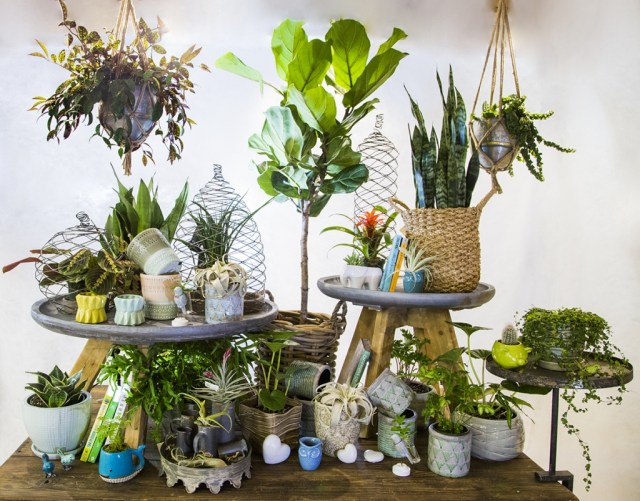 Indoor Plants Bath Garden Center
