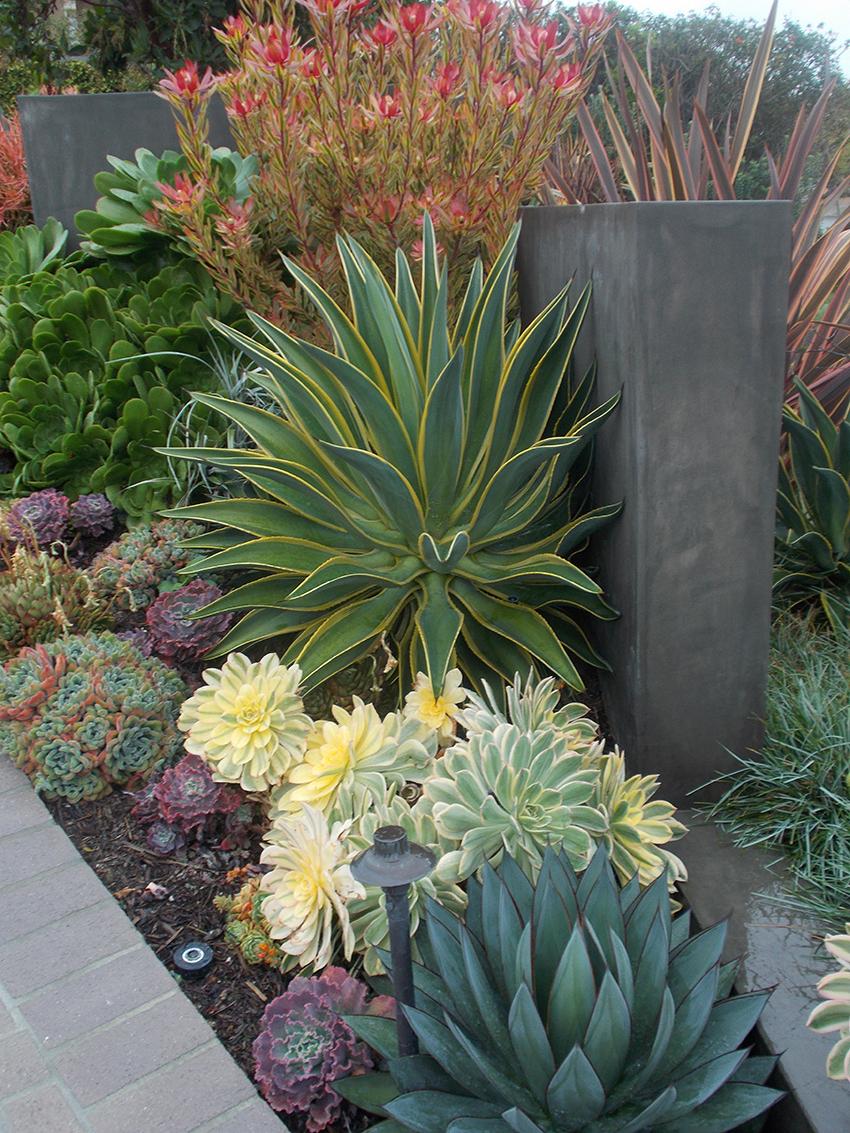 Inspirations Succulent Landscaping Drought Tolerant