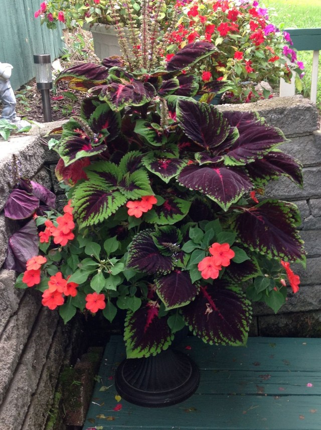 Outstanding Beautiful Fall Container Gardening Ideas For