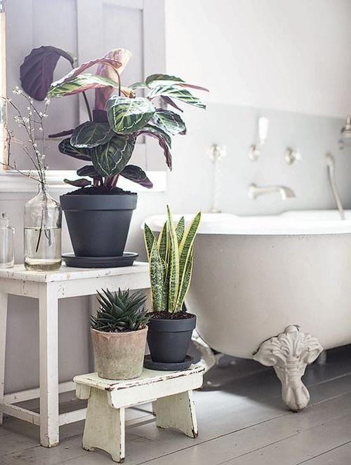 Pin Koho Nes On Home Bathroom Plants Best Bathroom