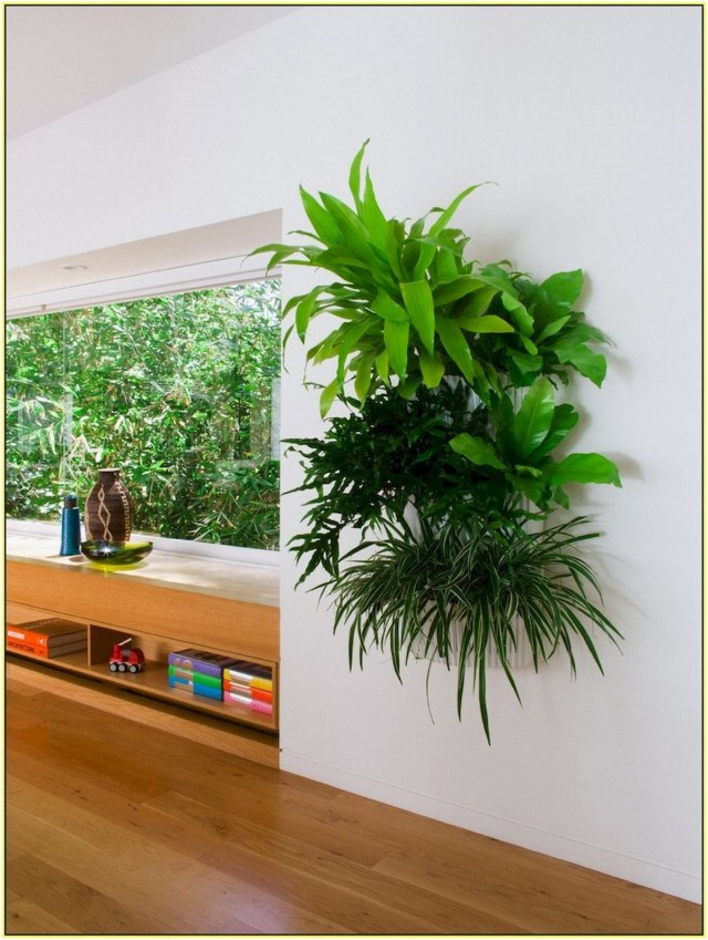 Pin Rae Ringhofer On Garden Nature Indoor Plant