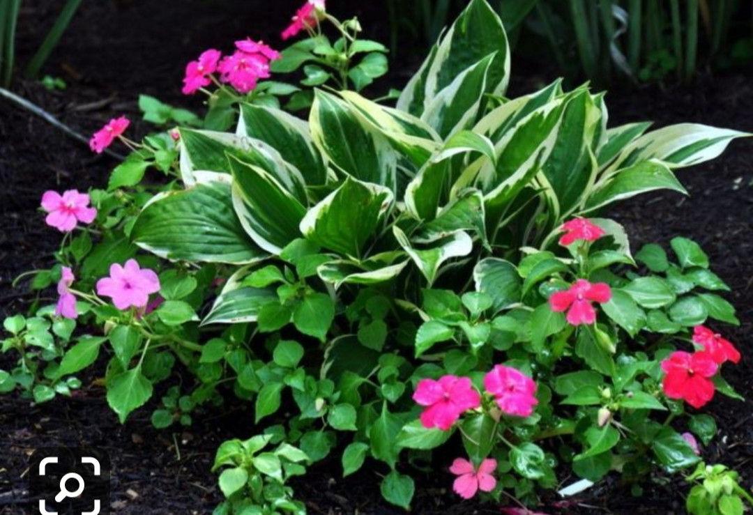 Pin Sherry Allnutt On Shade Garden Ideas Plants