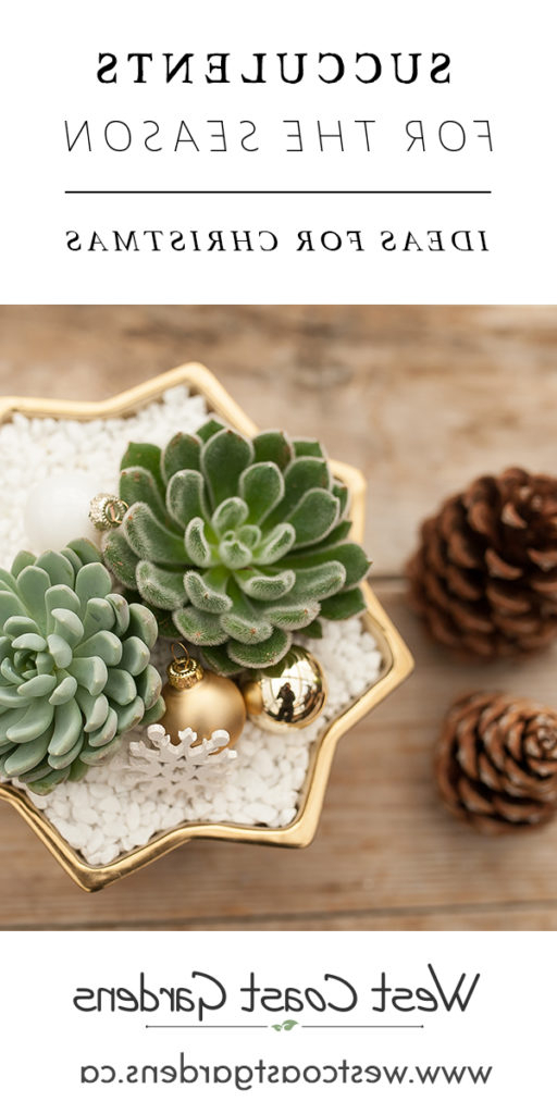 Succulents For The Season House Home Tips West Coast