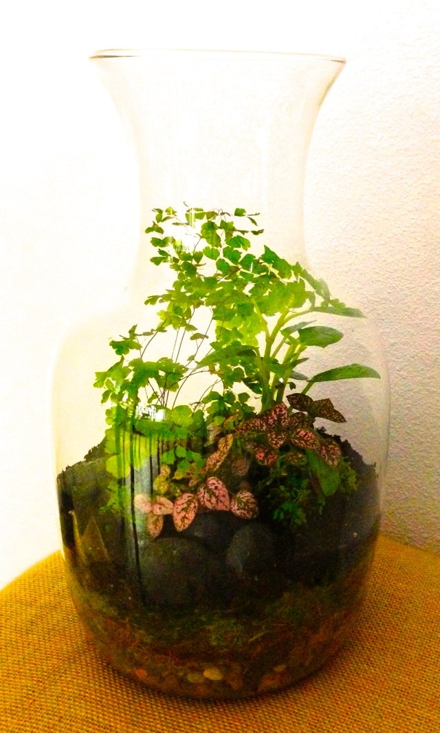 Terrarium With Ferns Polka Dot Plant And Ba Tears With