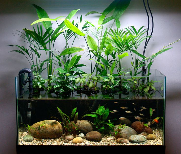 The 25 Best 10 Gallon Fish Tank Ideas On Pinterest 1