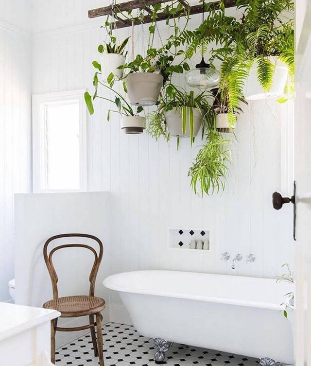 The Ultimate Guide To Indoor Hanging Plants My