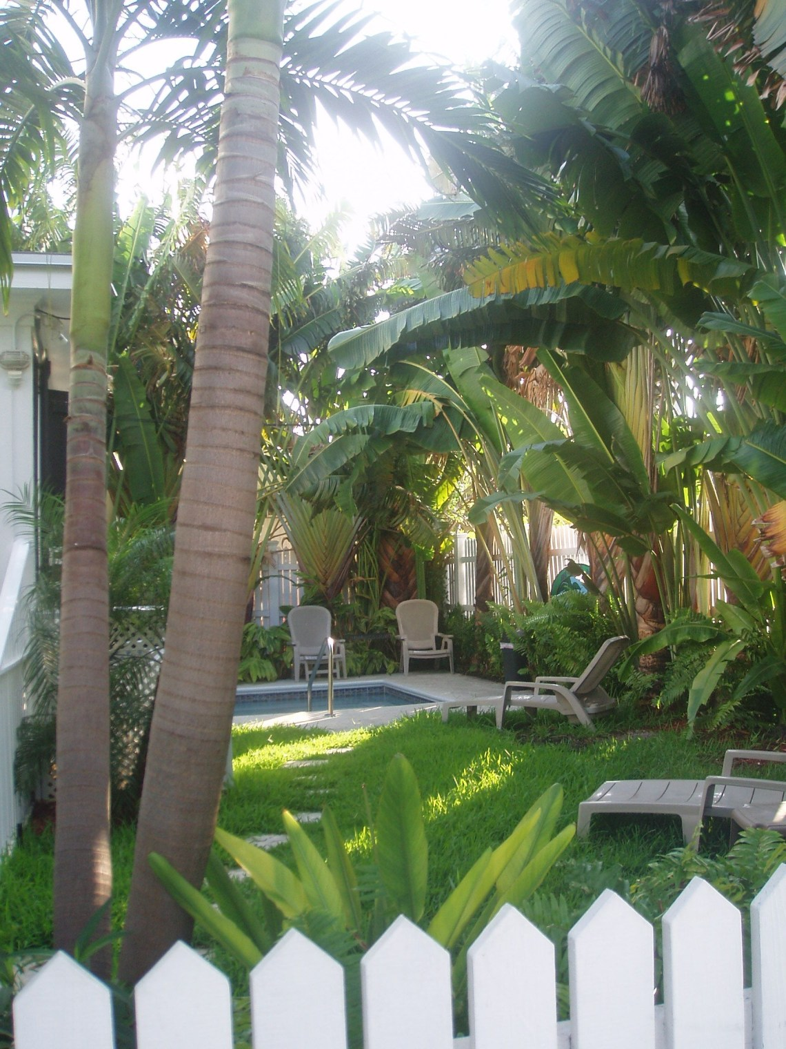 Tropical Garden Palm Trees Picket Fence Pool Tropical