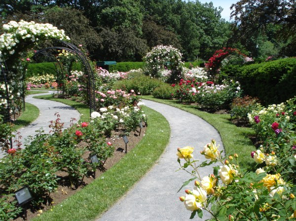 backyard rose garden ideas decoraton