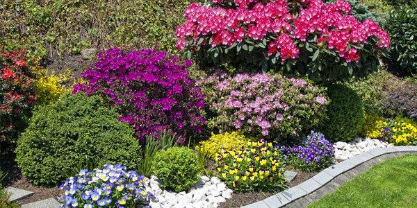 choose plants landscaping
