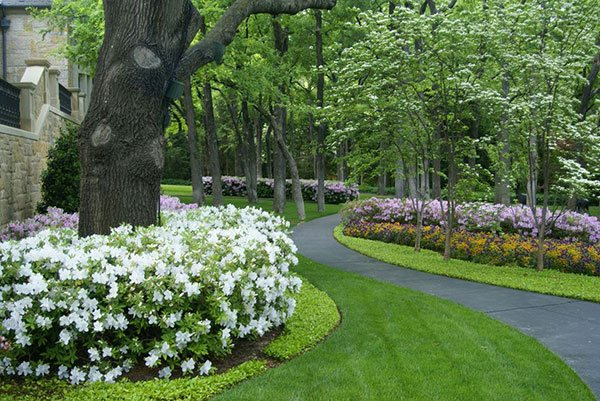 ways landscape with shrubs