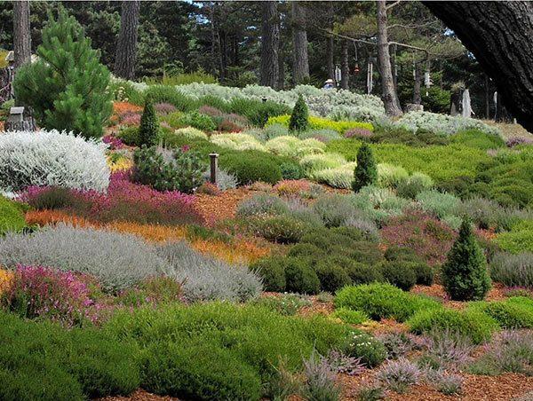 ways landscape with shrubs