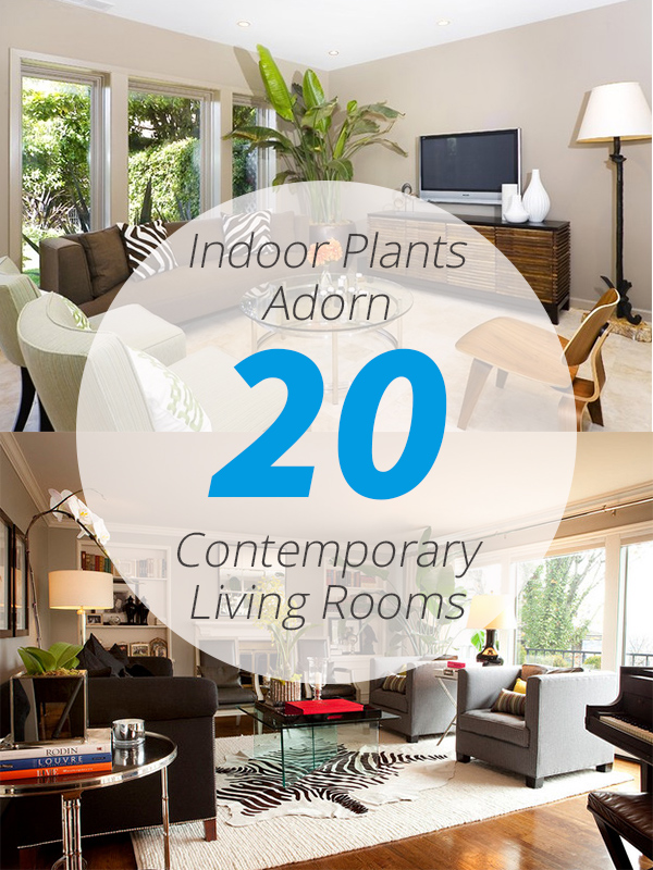 Indoor Plants Adorn 20 Contemporary Living Rooms Home Design Lover