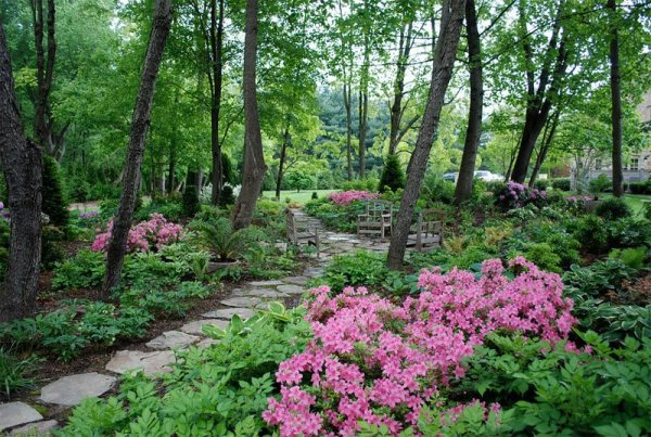 tree shade landscaping ideas
